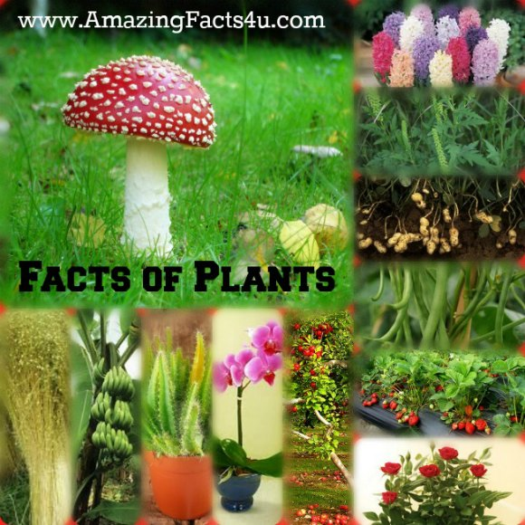 Plants Amazing Facts 4u