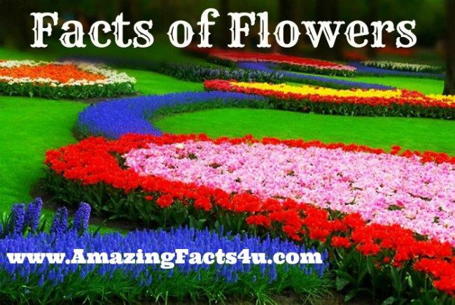 Flowers Amazing Facts 4u