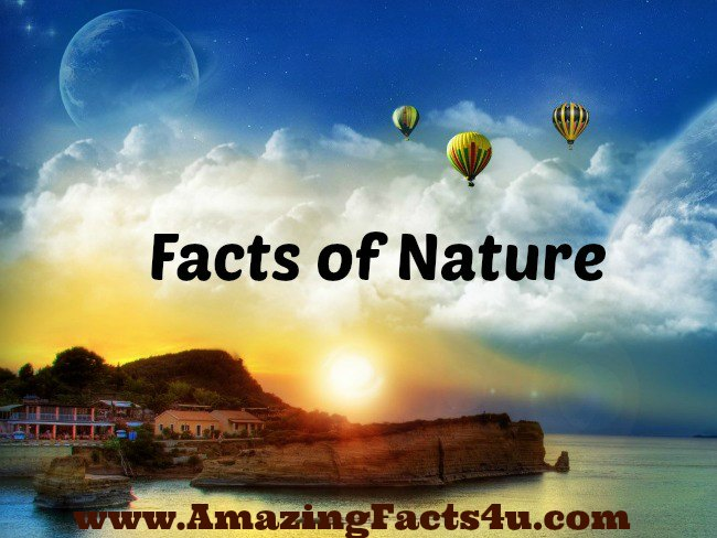 Nature Amazing Facts 4u