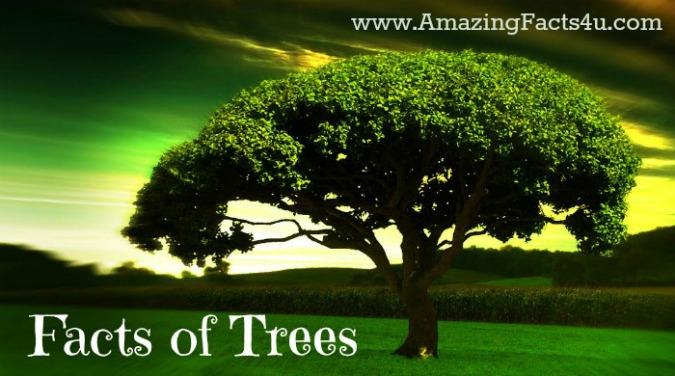 Trees Amazing Facts 4u