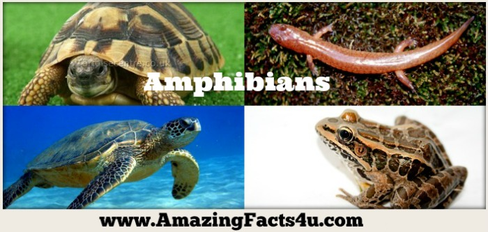 Amphibians Amazing Facts 4u