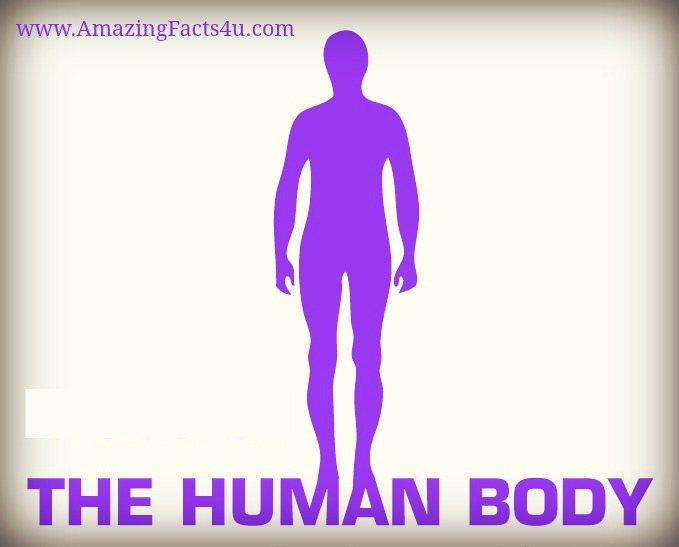 Human Body Amazing Facts 4u