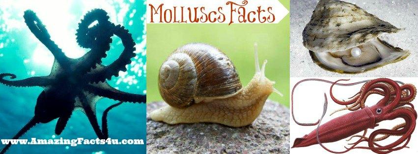 Molluscs Amazing Facts 4u