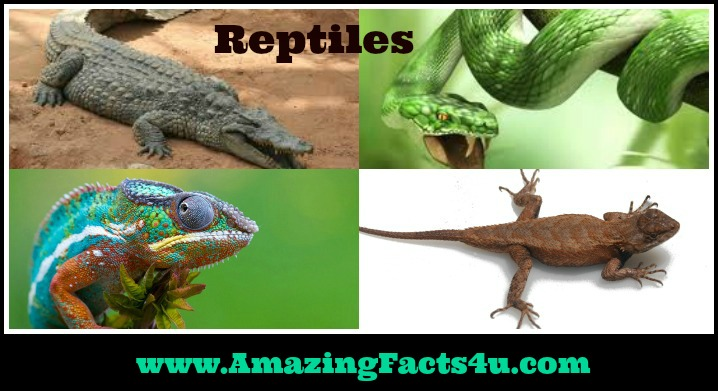 Reptiles Amazing Facts 4u