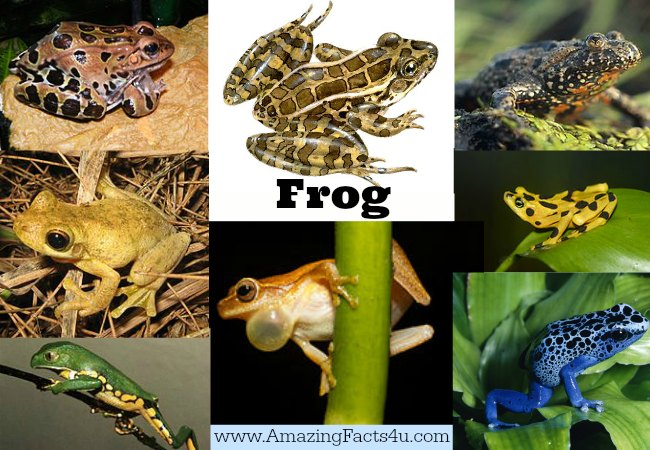 Frog Amazing Facts