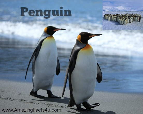 Penguin Amazing Facts 4u