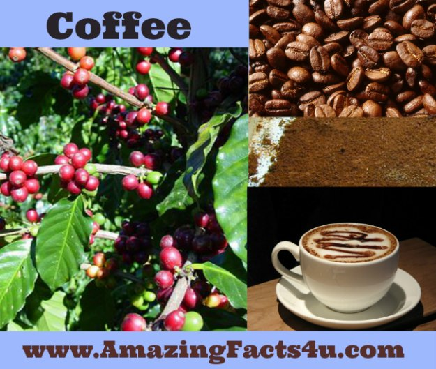 Coffee Amazing Facts 4u