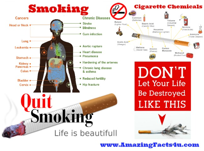 Smoking Amazing Facts 4u
