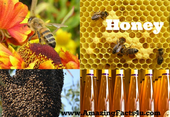 Honey Amazing Facts 4u