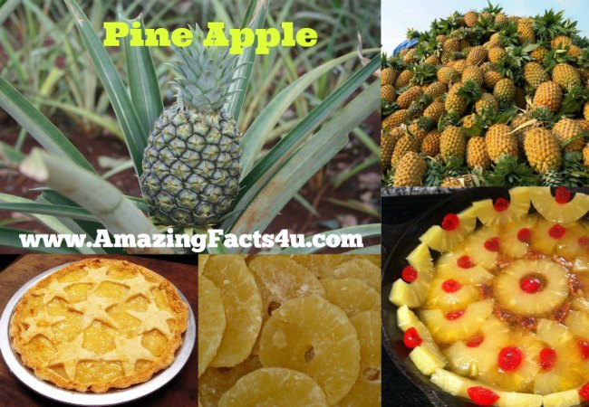 Pine Apple Amazing Facts 4u