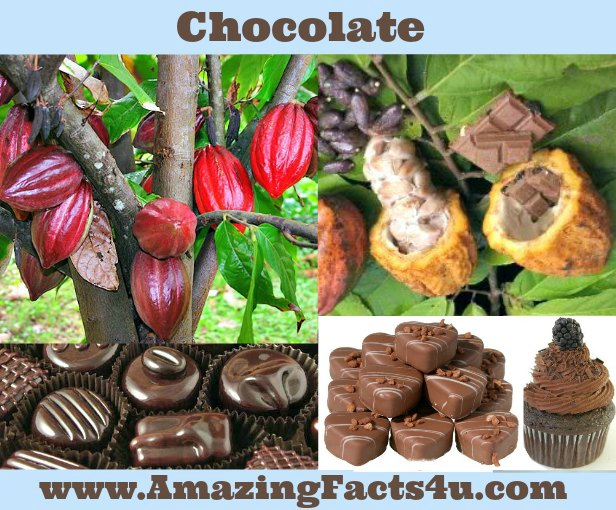 Chocolate Amazing Facts