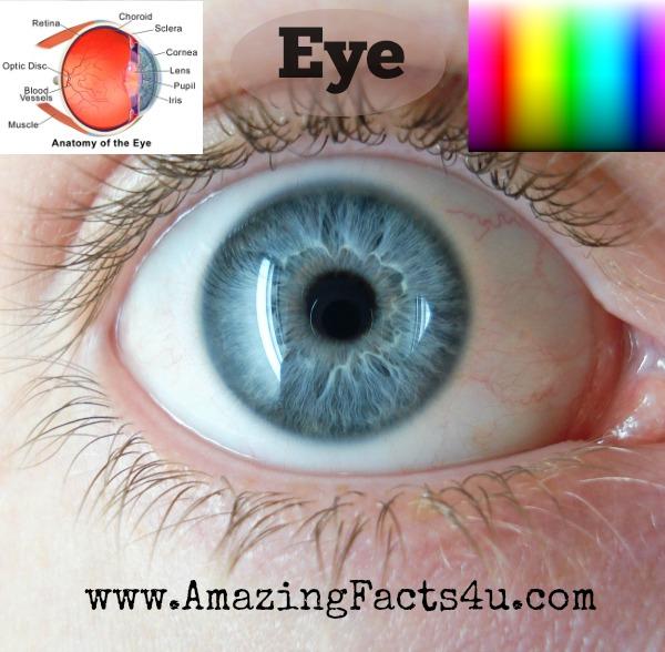 Eye Amazing Facts 4u