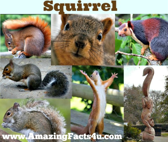 Squirrel Amazing Facts 4u