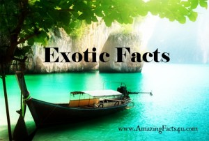 Exotic Facts