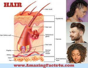 Amazing Facts Hair