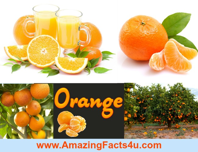 Amazing Facts Orange