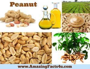 Amazing Facts Peanut