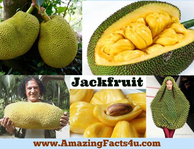 Funny Jackfruit Pictures