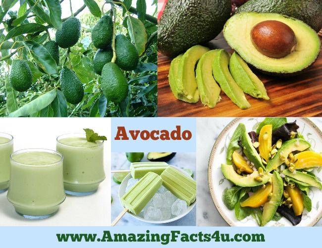 Amazing Facts Avocado