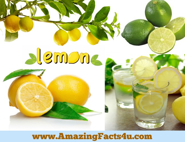 Amazing Facts Lemon