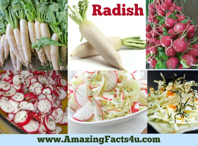 Amazing Facts Radish